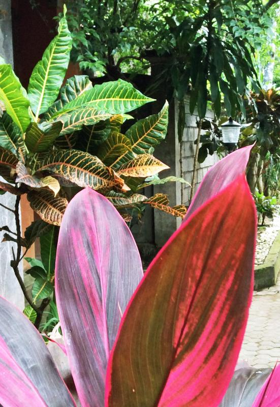 Exterior Tropical Garden Surrounds the complex