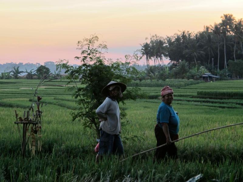 Donne balinesi dal nostro villaggio passando dalla casa dopo il lavoro nel tardo pomeriggio