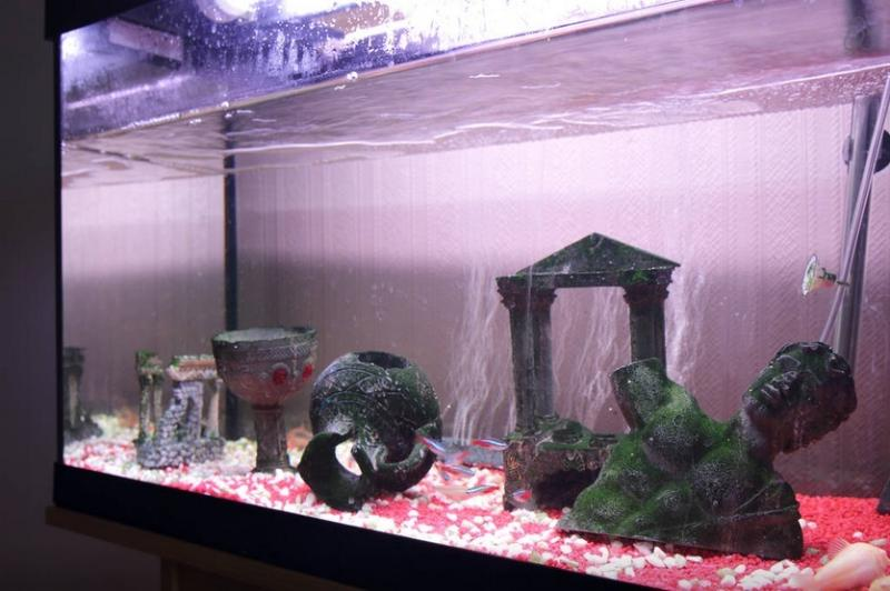 Tropical fishtank (fish are fed automatically by timer)