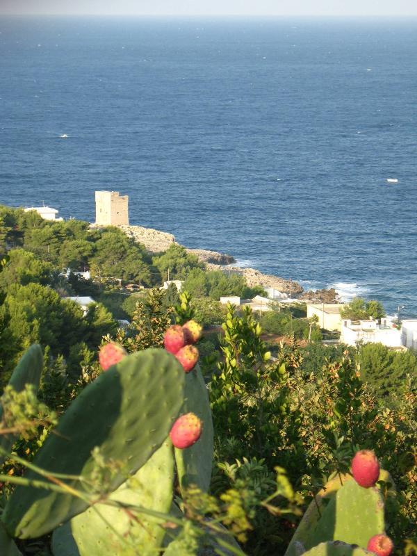 Viewof Marina Serra and Torre palane, only a 20 min walk from Villa Anna,