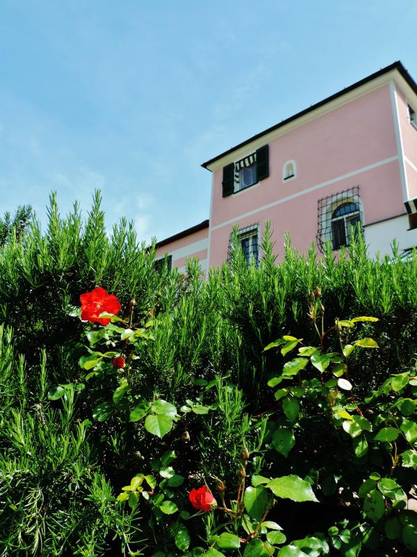 The central body of the villa seen from a hedge of roses and Rosemary.