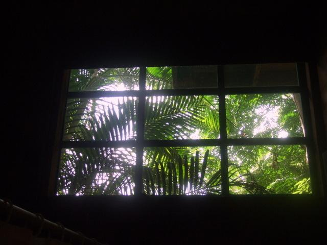 view from the bathroom window
