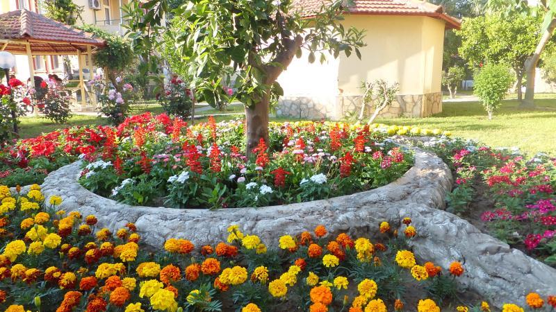 Flower garden arrangement in front of the villa