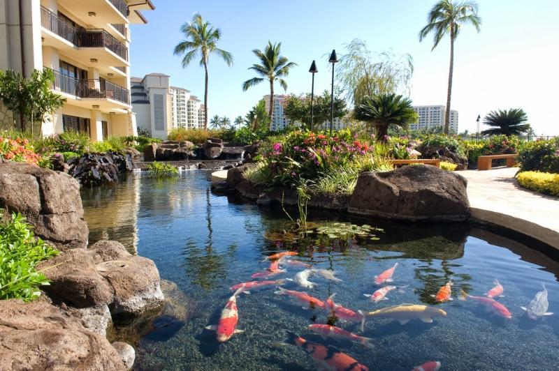 Koi Pond and Gardens