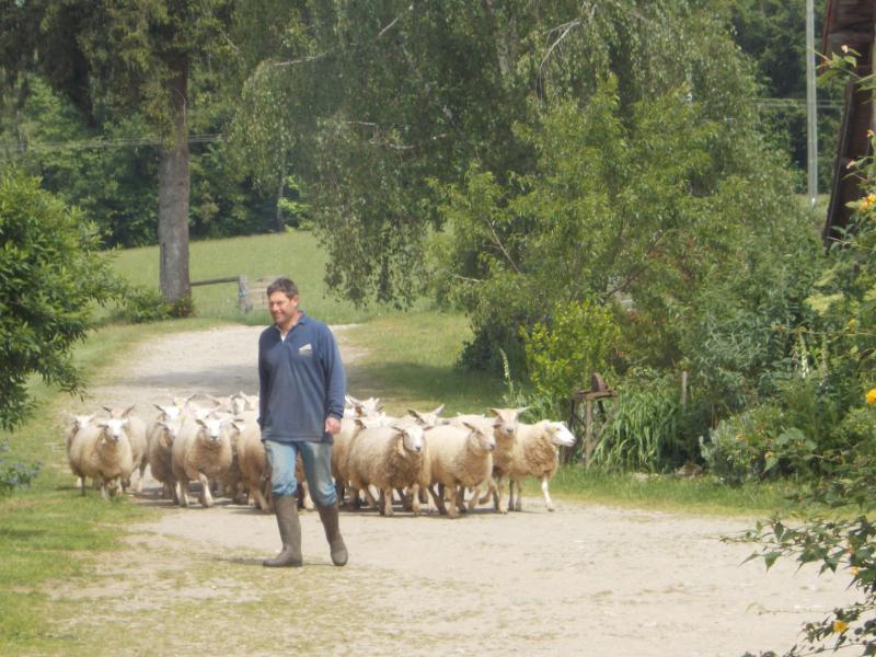 change of sheep meadow