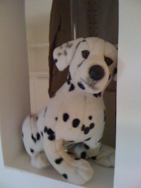 That is a dalmatian