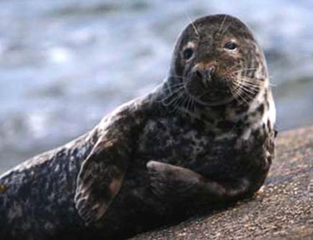 Sud Skye è una ricca paradiso per la vita marina e uccelli