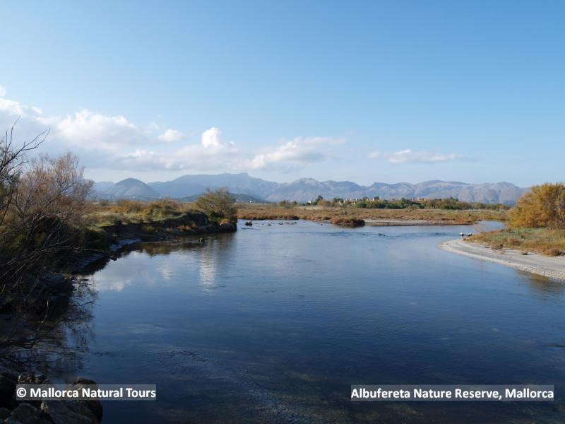 Albufereta Nature Reserve, a great birding site only 5 km away