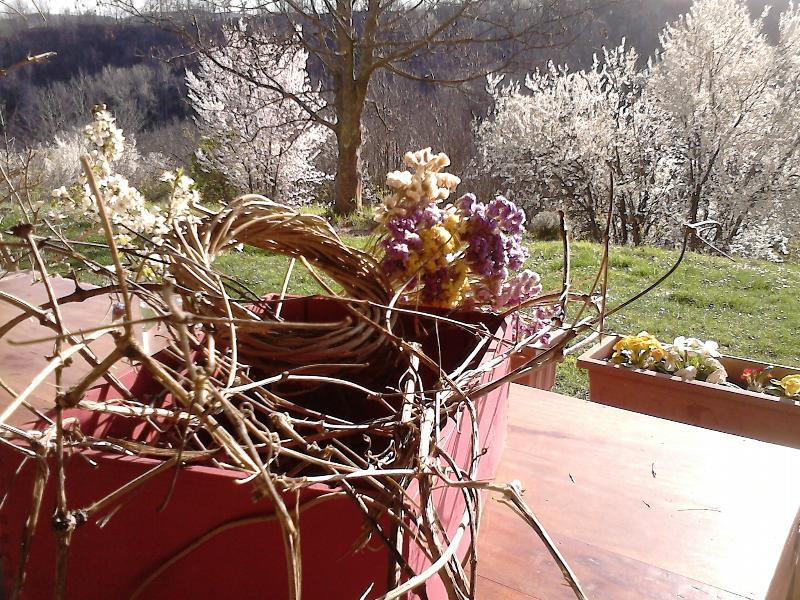 prime fioriture di metà marzo/ mid march spring blossoms