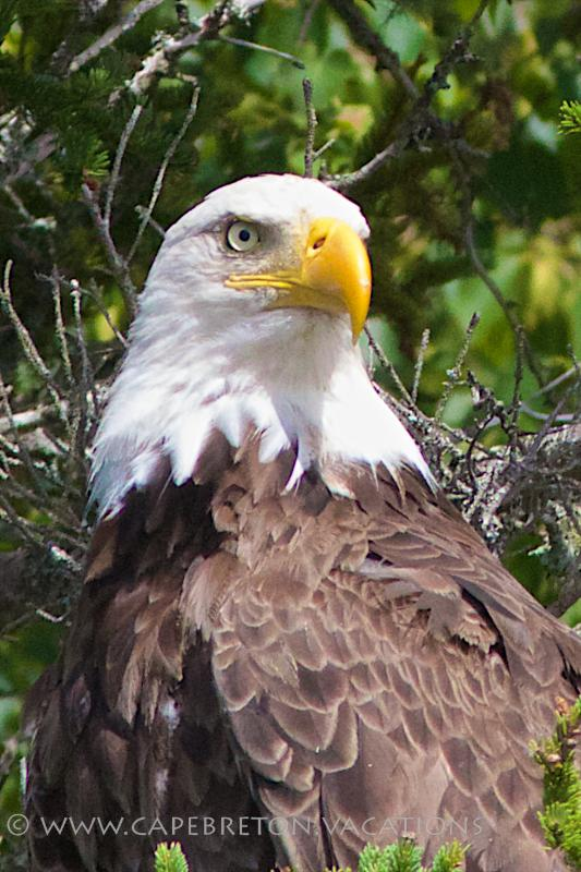 we guarantee that you will see Bald Eagles from the patio