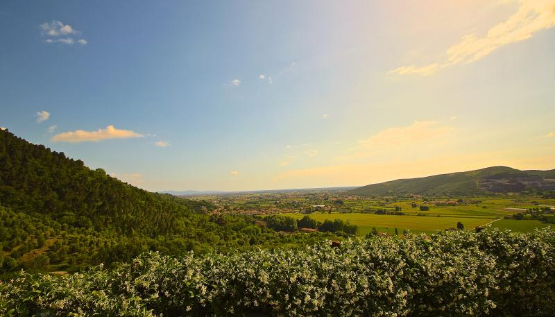 May evening views over olive grove, the valley, Pisa and Mediterranean
