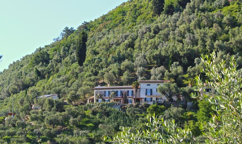 Front of both farmhouses, the olive grove, cypress trees and evening view.