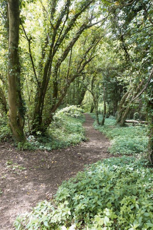 The approach to the Meon Valley Trail