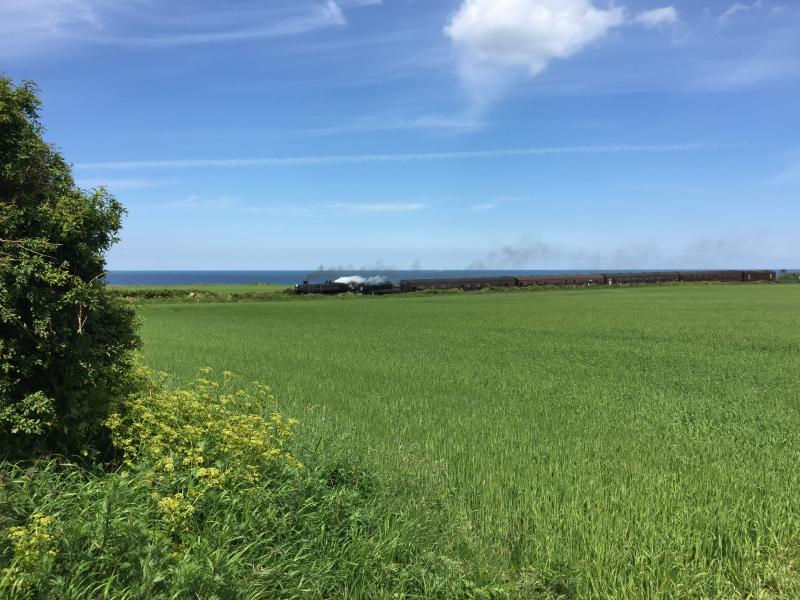 Steam train (Sheringham to Holt) - view from Sheringham Park