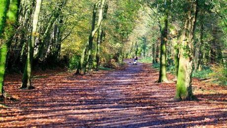 Disfrute de un paseo por el bosque