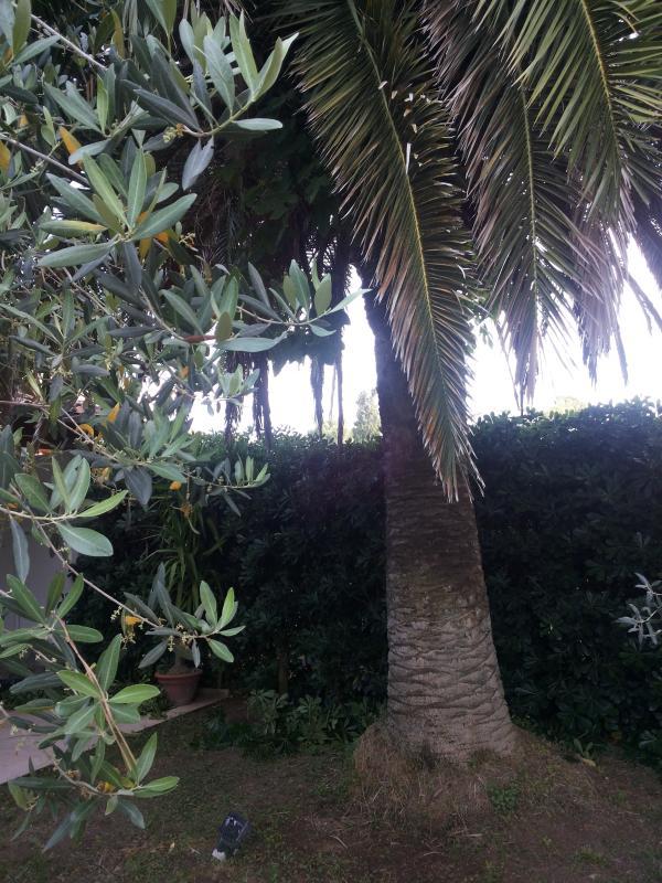 La Palma ed uno dei tre Ulivi.