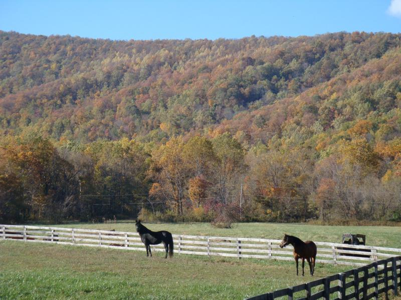 Horseshoe Hollow Farm