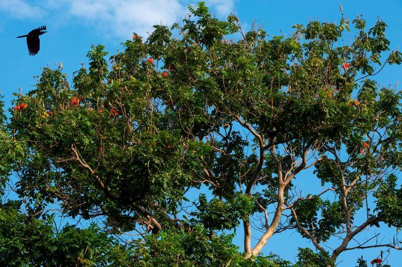 Nature all around - Villa Frangipani, Canggu, Bali