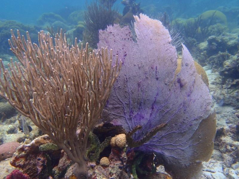 Embárcate con Pantalasa y te mostraremos los mejores fondos de coral de San Blas