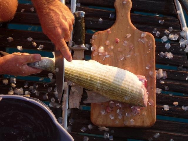 Saborea deliciosos platos de pescado al poco rato de haberlo cogido. Más fresco imposible!