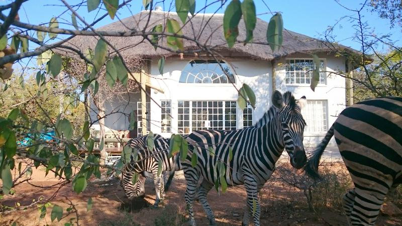 Hyena House 4180, holiday rental in Marloth Park
