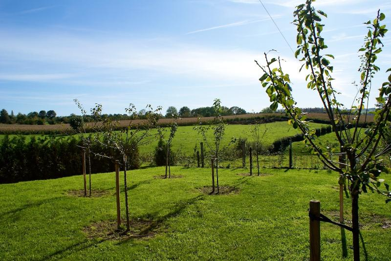 The orchard surrounding the farm.