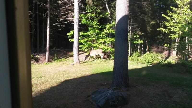 Otro ciervo en el jardín