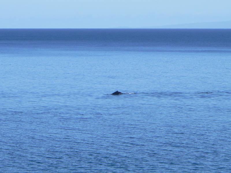 Relógio de baleia da MK806 lanai