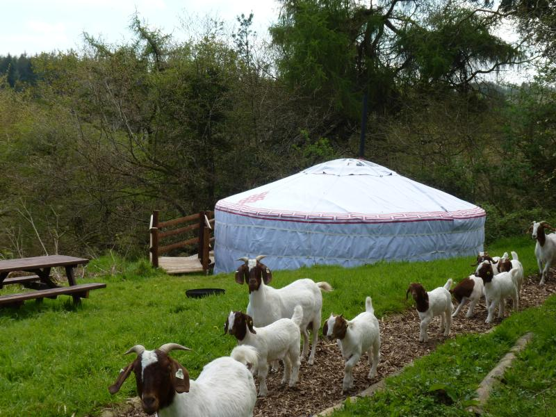 Snuggledown is nestled at the end of our top paddock surrounded by trees.