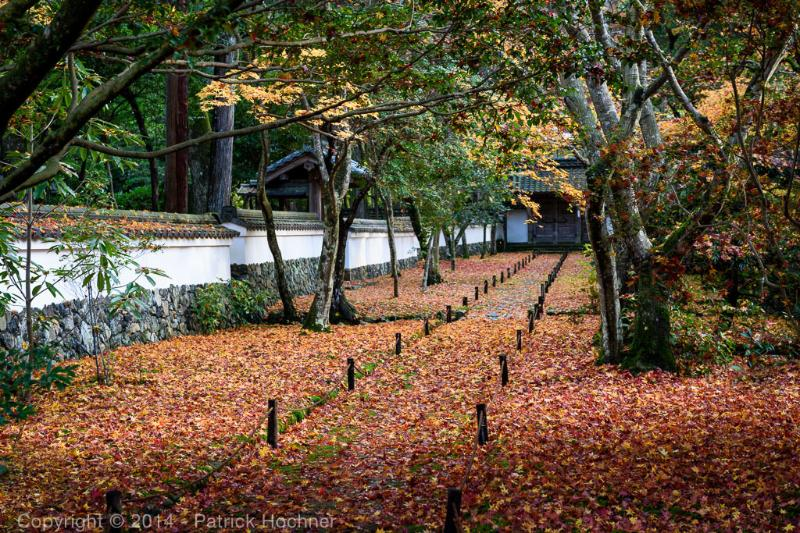 Autumn at the Kokedera Temple, aka Moss Temple (Unesco site)