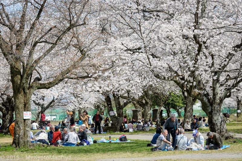 Hanami or Flower Viewing party