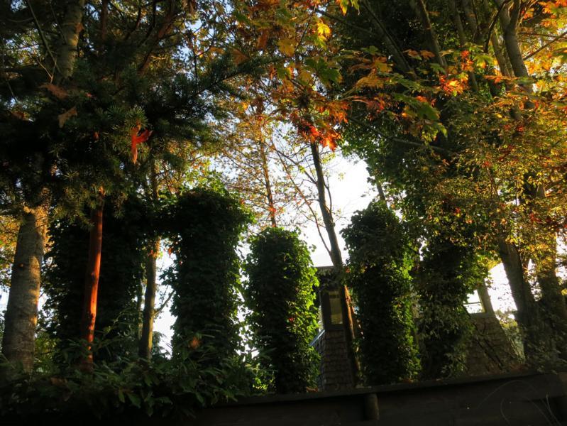 Pilastri di Ivy nel cortile sul retro