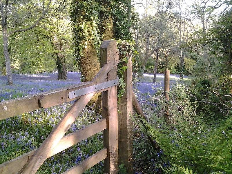 View from the woods towards the bluebell meadow. Book for next year. May is a great time to see this