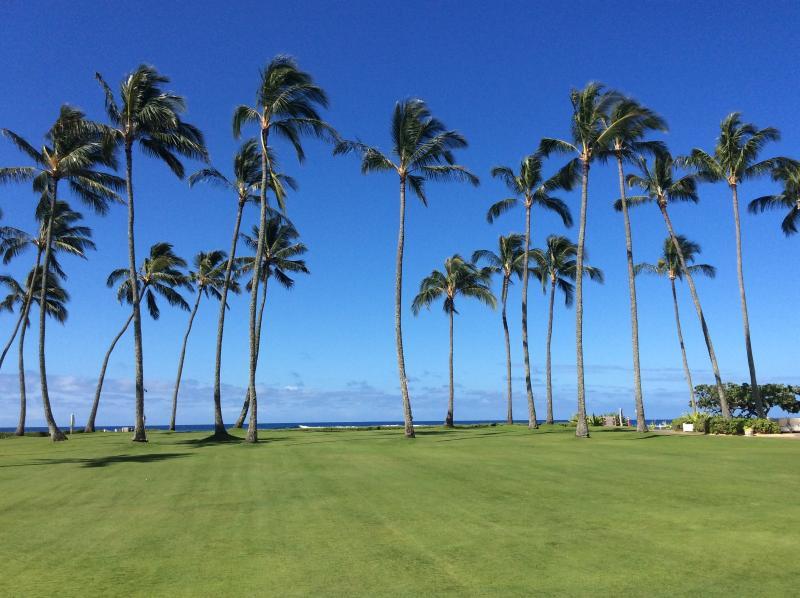 beach front lawn