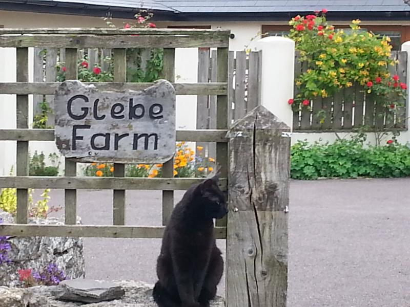 Luke the cat is always ready to welcome guests!