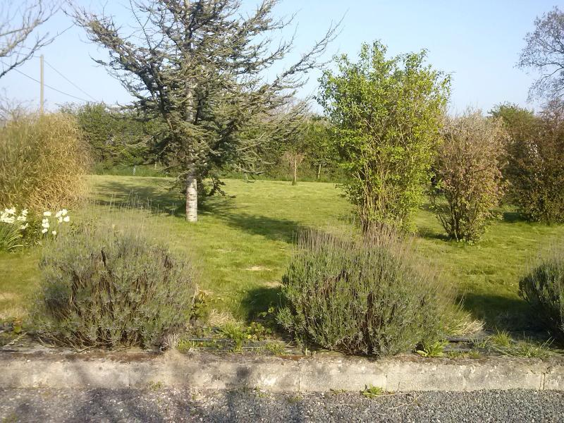 Jardín con árboles frutales y aromas de lavanda