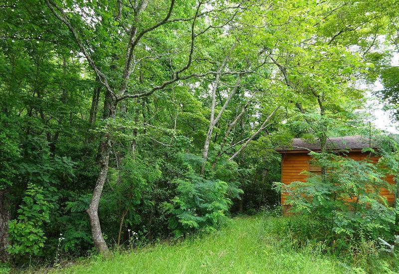 Het bos ligt in uw achtertuin