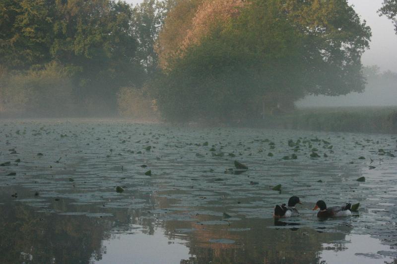 L'étang au petit matin en automne