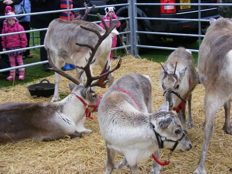 Santa's reindeer always pay Strathaven a visit in December