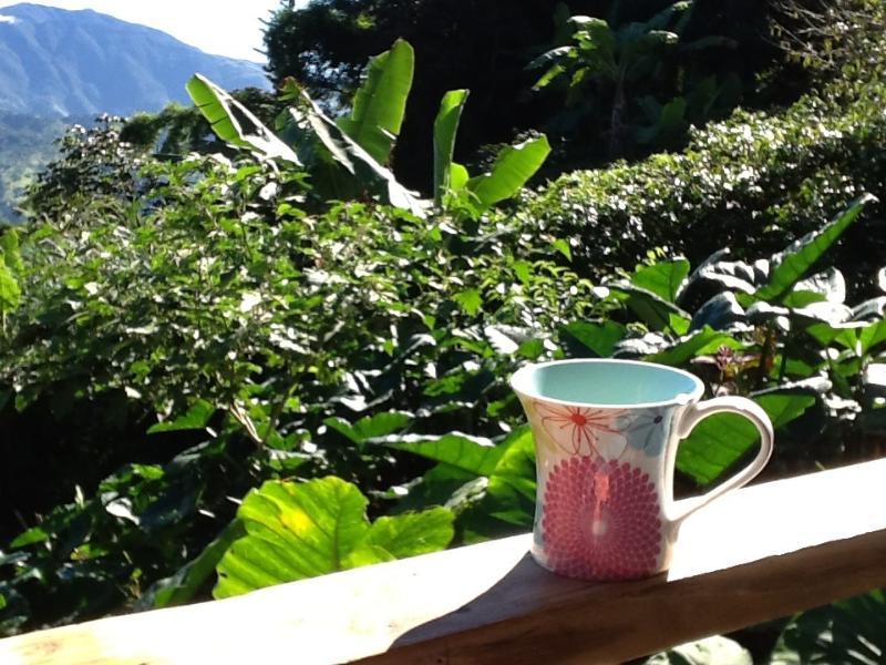 Bebiendo café Blue Mountain