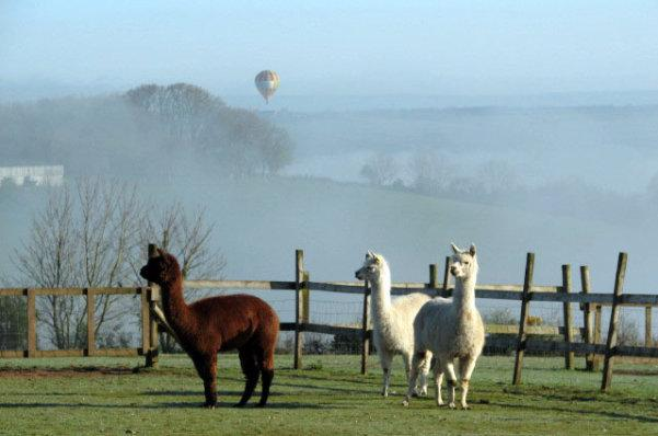 Meet our alpacas and take in the beautiful view from the garden