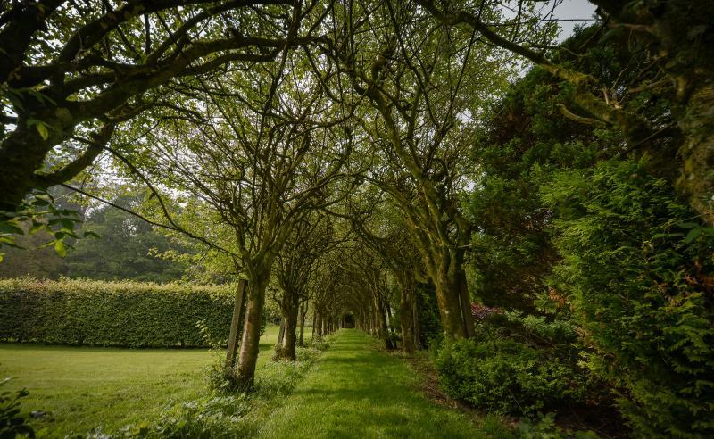 Traforo di albero giardino murato