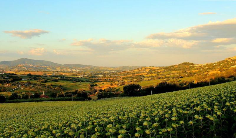 Countryside, Osimo