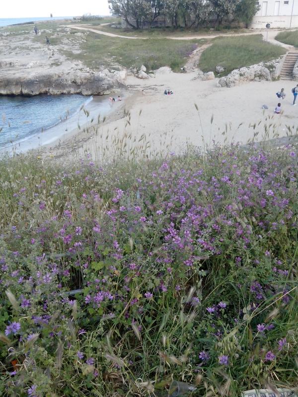 Spiaggia a pochi metri