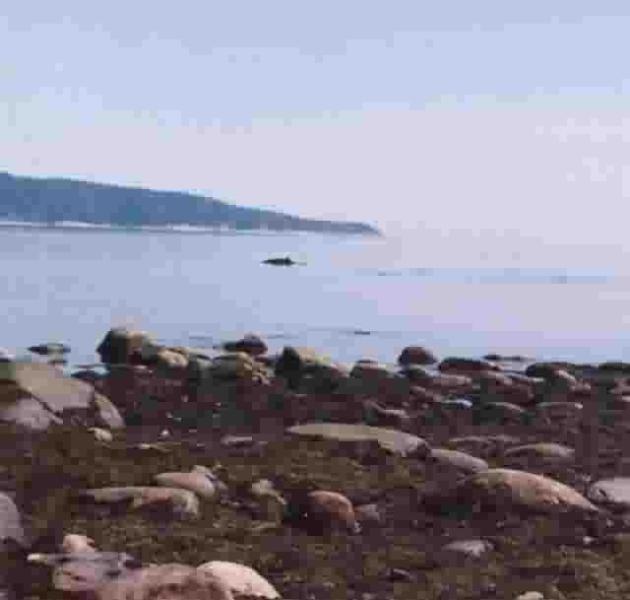 Possibilités de  voir des baleines.