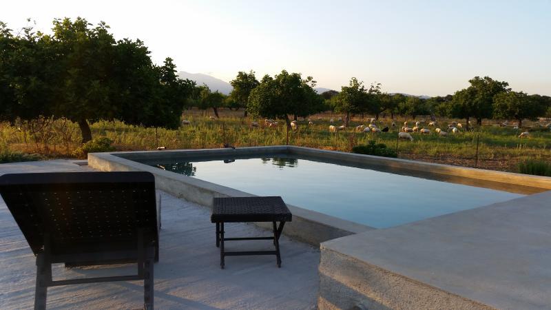 Mallorcan pool