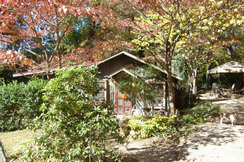WISHING TREE CABIN is surrounded by blooming flowers and bushes. medicinal plants,and ancient trees