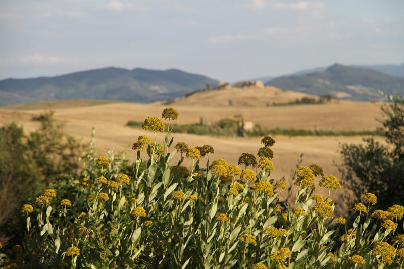 Landscape by Volterra