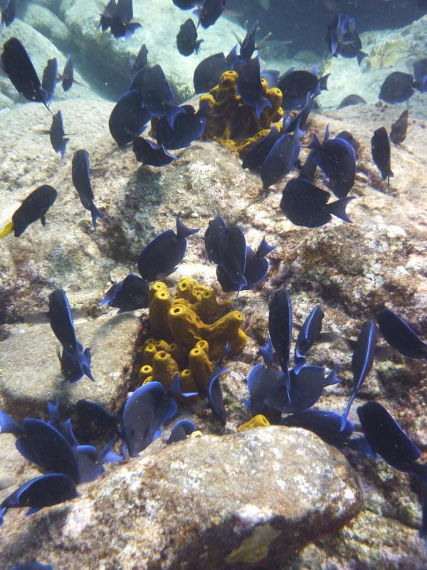 You'll be at 35 min from the Cousteau reserve, but there is great spots closer too!