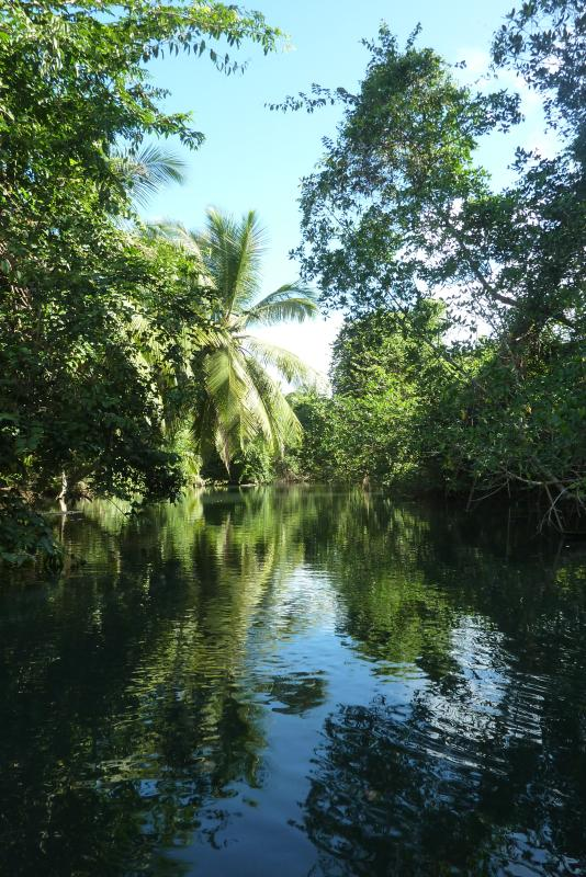You can visit mangrove, between coast and sea